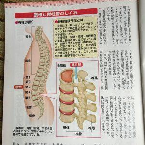脊柱管 図解